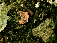 Microplastic fragment in soil